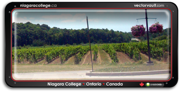 niagara college vineyard