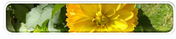 flower-NFT-Nat-vectorvault-production-manager-natalie-jarvis